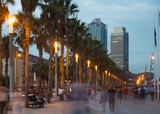 Palm alley on waterfront in Barcelona in summer evening - 183804874