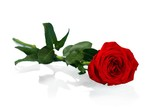 Red Rose with Green Stem - 183807661