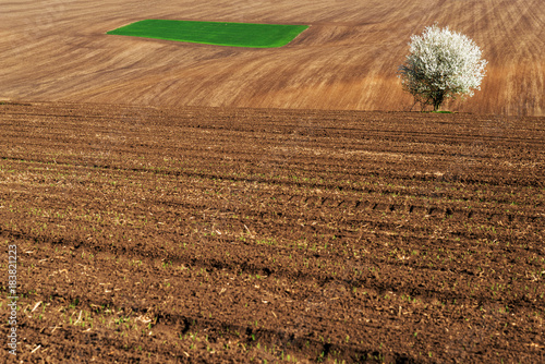 Fotobehang Lente Idyllic rural view of farmland and blossoming tree in the spring - selective focus, copy space