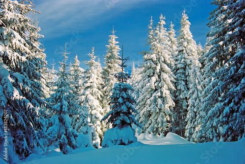 Foto op Aluminium Blauwe jeans Winter landscape in the mountains