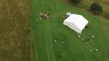 A herd of sheep departs from a white tent in the mountains. - 183835823