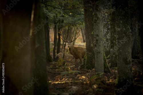In de dag Weg in bos Cerf en forêt