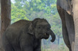 Quadro Elephant and baby elephant in National park of Nepal