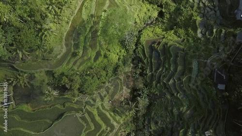 Papiers peints Les champs de riz green rice terrace in bali indonesia