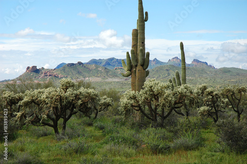Deurstickers Arizona cactus and mountains in wild area in Phoenix