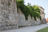 Antique Medieval Wall with Climbing Plants and House in Italy Street - 183903284