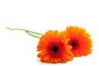 Lovely orange flowers