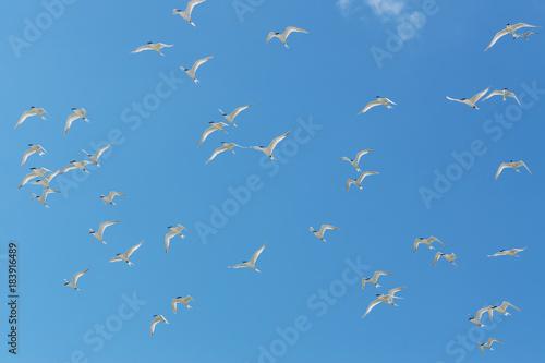 White birds in blue sky