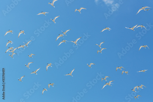 White birds in blue sky Poster