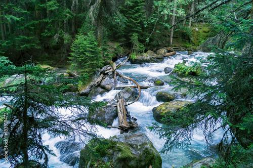 Plexiglas Bergrivier Дерево, которое падало через горную реку, похоже на лук гиганта.