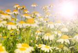 Summer wildflowers - 183930422