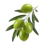 Vertical green olive branch isolated on white background - 183933675