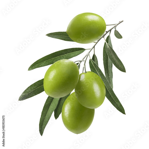 Foto Murales Vertical green olive branch isolated on white background