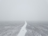 Winter landscape. Road through the field. Blizzard. - 183936438