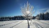 Naturlandschaft im Winter - 183961473