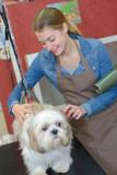 Pet groomer brushing dog