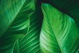 green leaves dark nature background - 183968819