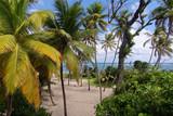 Anse Michel Beach near Cap Chevalier - Sainte Anne - Martinique - FWI - 183981810