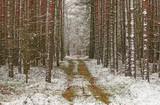 Początek zimy. Pierwszy śnieg. - 183986294