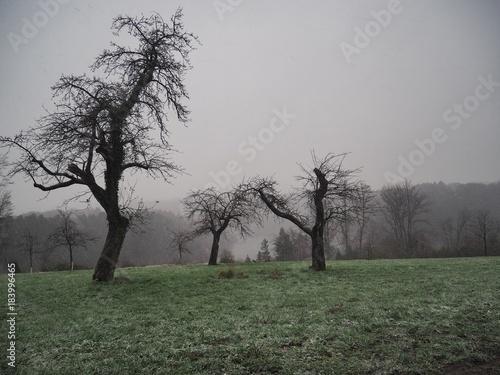 Deurstickers Khaki alte Apfelbäume auf einer Wiese im Herbst