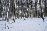 Winterwald im Taunus - 183998809