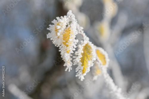 Foto op Canvas Grijs Raureif auf Blättern