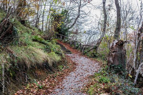 In de dag Weg in bos Escapada a la montaña