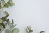 Leaves on white background - 184040089