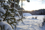 Sunrise behind the snow covered spruce tree branches. Beautiful snowy scenery in Finland. - 184040613