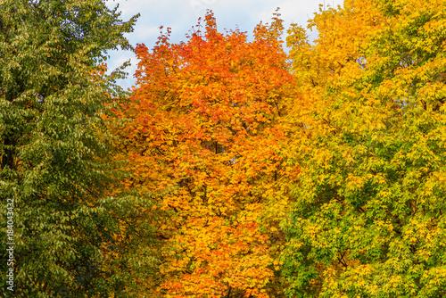 Keuken foto achterwand Oranje autumn landscape in a Park in Moscow