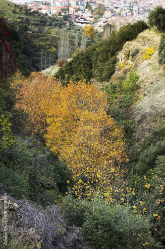 Deurstickers Khaki Colorful trees in the valley