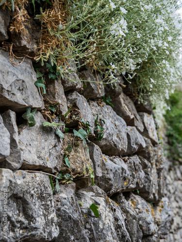 Tuinposter Baksteen muur Bewachsene Mauer
