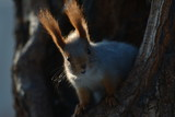 Squirrel on a tree close up - 184064469