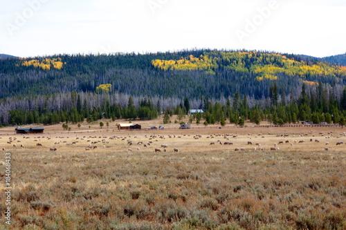 Foto Murales Colorado Fall
