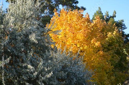 Tuinposter Herfst yellow autumn trees