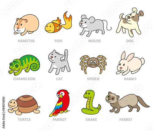 Fototapeta Pet shop, set types of pets