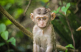 monkey sitting in the jungle - 184086478