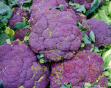 raw organic dark mauve broccoli top view - 184093093
