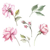 Set of flowers roses. Hand draw watercolor illustration - 184094818