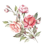 The image of a rose.Hand draw watercolor illustration - 184094845