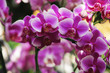 beautiful orchid flower in winter