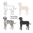 Great Dane  Dogs Sketches