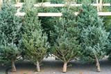 Christmas trees in the farm market for sale in holiday season - 184120404