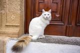 Sokakta Yaşayan Kedi