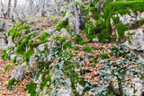 Mountain rocks overgrown with forest plants - 184122802