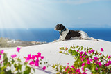 Dog looks at the sea - 184129443