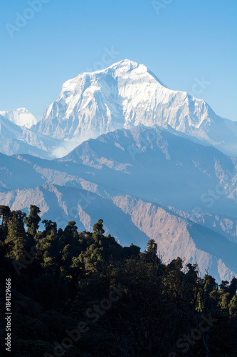 Forest with high mountain peak Poster
