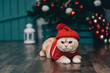 Cute ginger cat in red christmas sweater and knitted hat, christmas background. Christmas postcard.