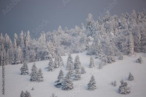 Foto op Canvas Grijs Forêt des Vosges en hiver