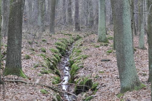 In de dag Weg in bos Runo leśne